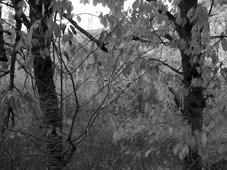 Otoño. Peguerina 2007