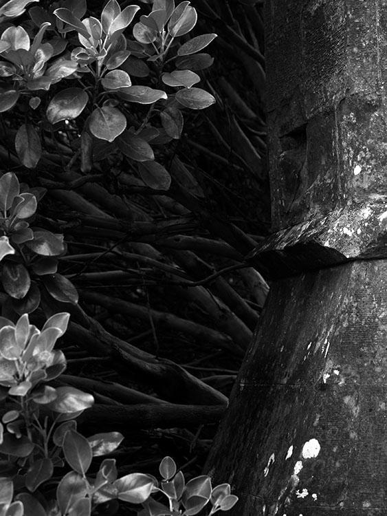 Jardin. Escocia2005