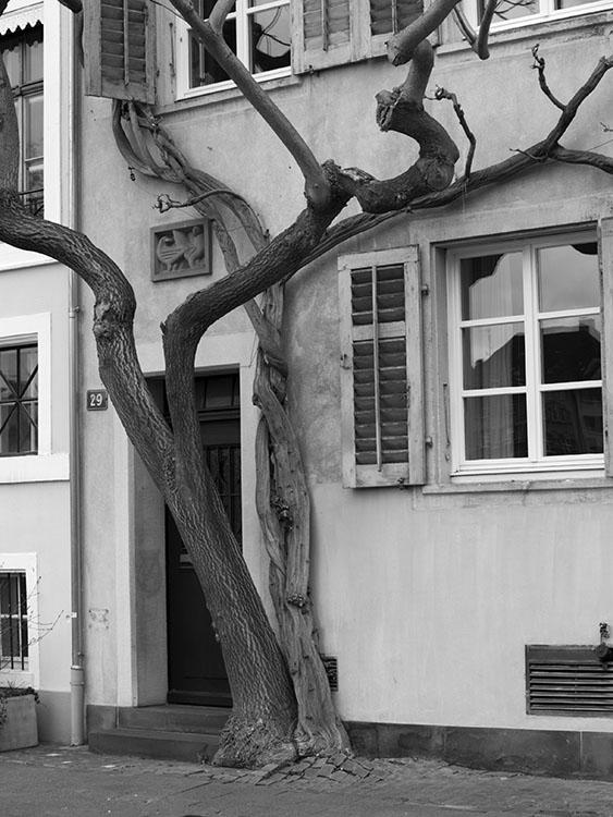 Dos arboles. Basilea 2008